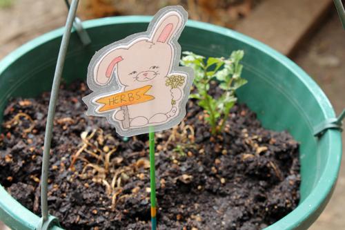 Bunny_plant